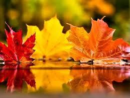 Intersaison de l'automne (Rate-Pancréas/Estomac)